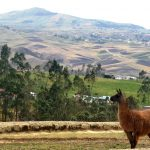 Ecuador_landscape_Guardian-of-the-Ruins-Careycropped